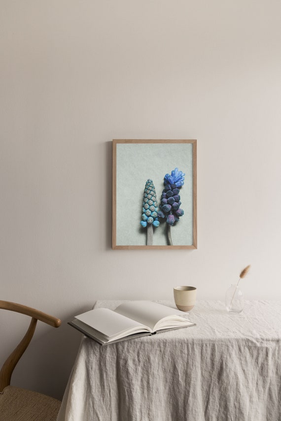 Photography  art print of the blue and purple spring flower grape hyacinth. Print is printed on a high quality, matte paper.