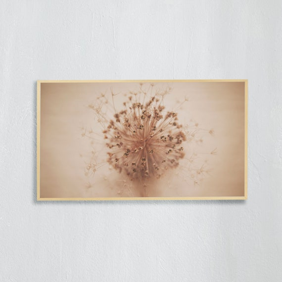 Frame TV Art, Digital downloadable art photography, Minimalist Art photo of the dried allium flower, Art for digital TV