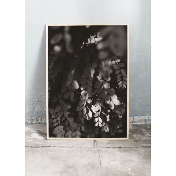 Black and white digital downloadable photo of leaves and plant.
