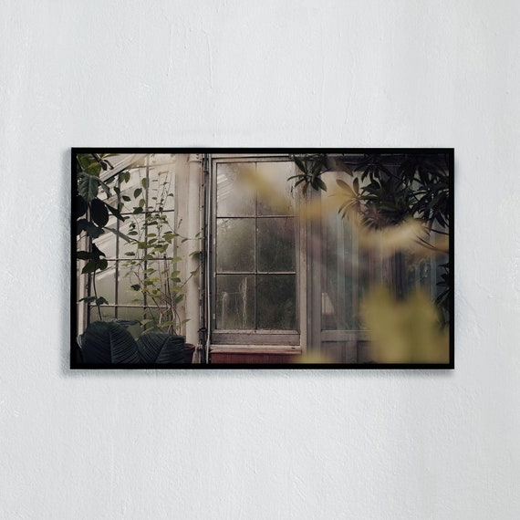 Frame TV Art, Digital downloadable art photography, Art photo from a greenhouse in the Copenhagen Botanical gardens, Art for digital TV