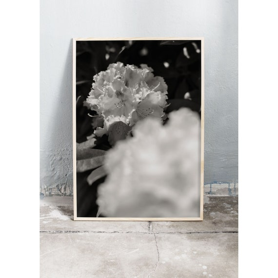 Black and white digital downloadable photo of a flowering rhododendron in the botanical garden in Copenhagen.