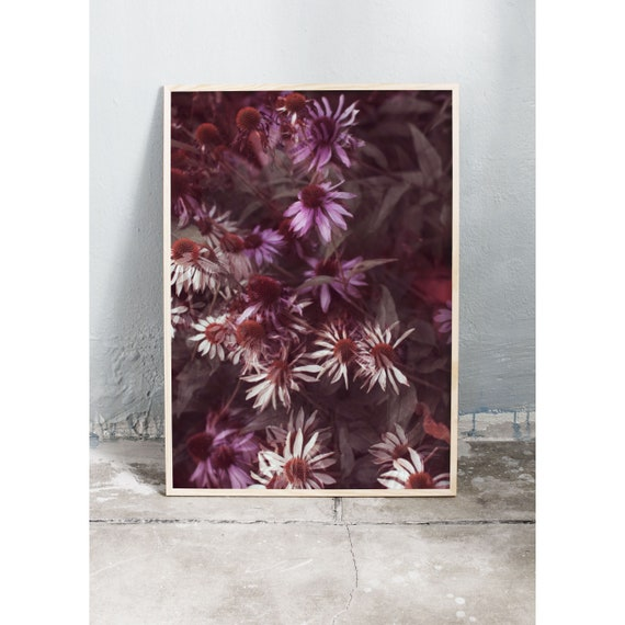 Photography art print of white and purple echinacea flower. Print is printed on a matte, high quality paper.