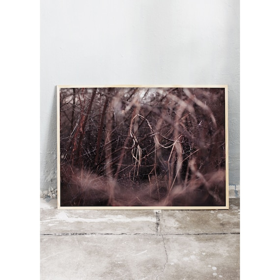 Photography art print of blackthorn and grass in nature. Printed on a high quality, matte paper.
