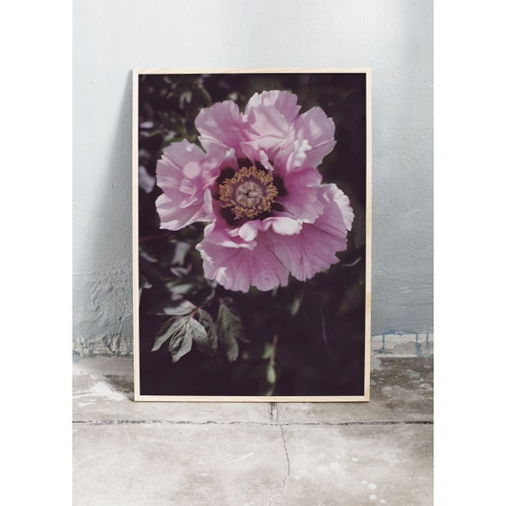 Photography art print of a pink peony. Print is printed on a high quality, matte paper.