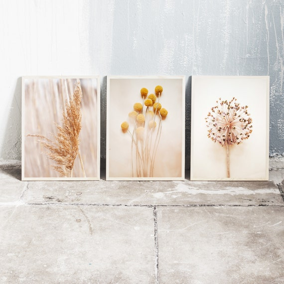 Set of 3 downloadable and printable photography prints, natural tones wall art, reed grass, billy balls and a dried allium flower.