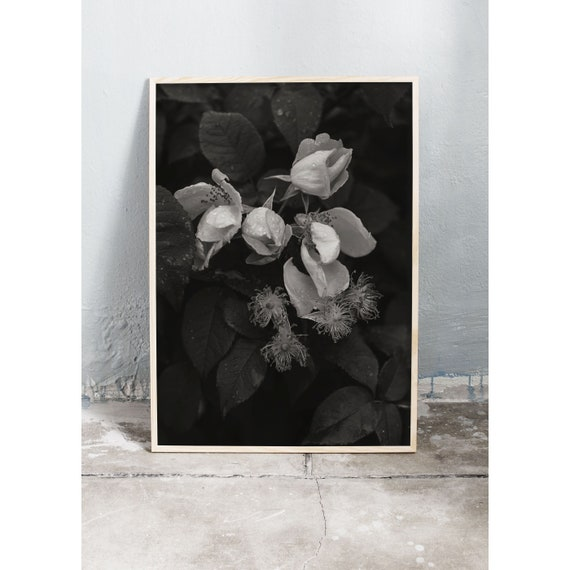 Black and white digital downloadable photo of rainy roses.