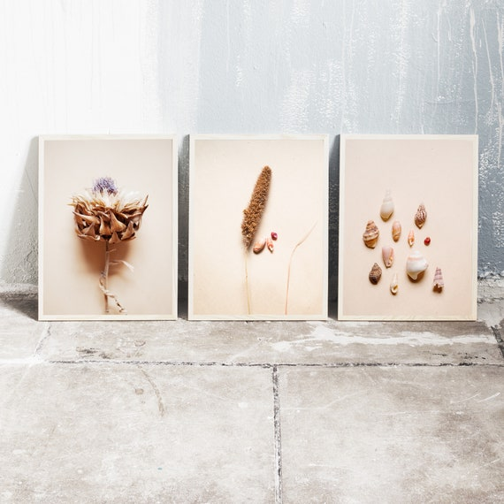 Set of 3 downloadable and printable photography prints, natural tones wall art, 3 images with sea shells, dried grass and dried artichoke.