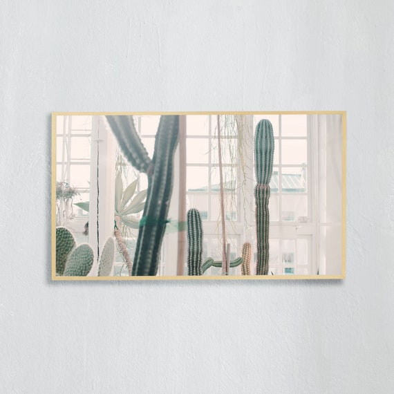 Frame TV Art, Digital downloadable art photography, Art photo of cactuses in a greenhouse, Art for digital TV
