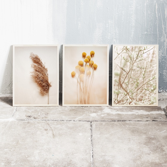 Set of 3 downloadable and printable photography prints, natural tones wall art, reed grass, billy balls and the sallow tree