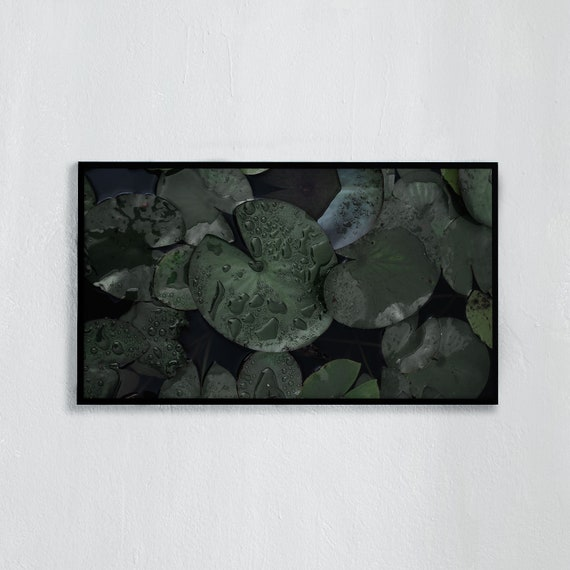 Frame TV Art, Digital downloadable art photography, Art photo of the green leaves of the water lilly , Art for digital TV