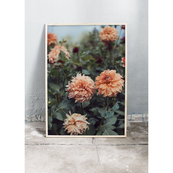 Photography art print of burnt orange coloured dahlias. Print printed on high quality, matte paper.