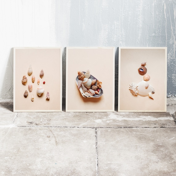 Set of 3 downloadable and printable photography prints, natural tones wall art of sea shells