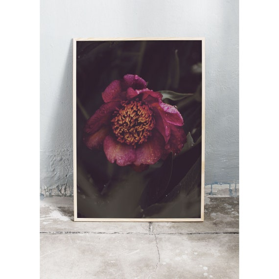 Moody photography art print of pink peony. Print is printed on a high quality, matte paper.