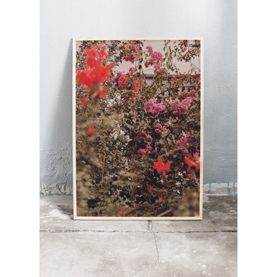 Photography art print of red and pink bougainvillea growing in Greece. The print is printed on a high quality, matte paper.