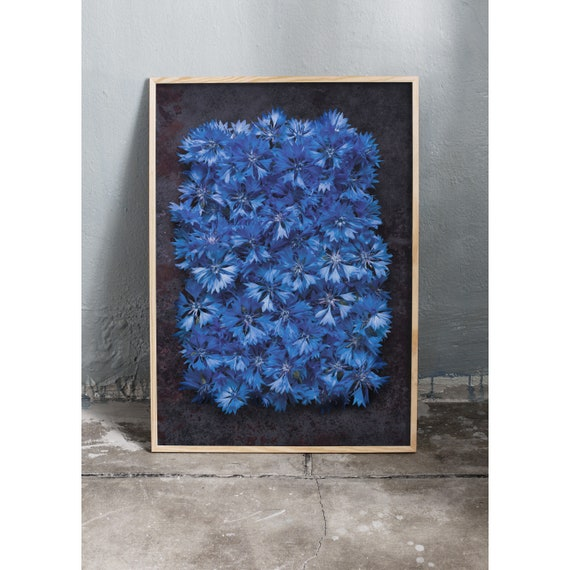 Photography art print of blue wild cornflowers. Print is printed on a high quality paper and a limited edition of the largest format.