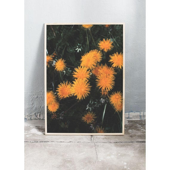 Art photography print of the yellow dandelions caught in the wild nature in springtime. Print is printed on a matte, high quality paper.