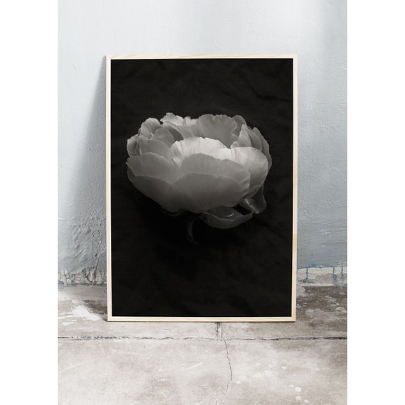 Black and white digital downloadable photo of a peony.