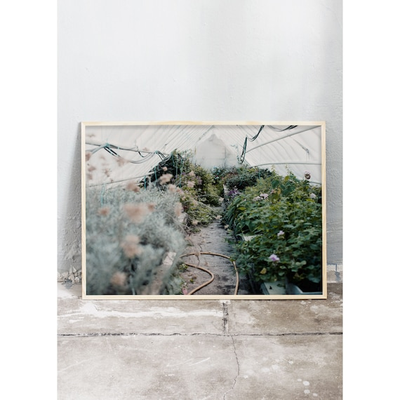 Photography art print from photo of green and grey plants in a greenhouse. Print is printed on a high quality, matte paper.