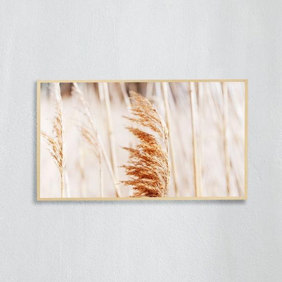 Frame TV Art, Digital downloadable art photography, Art photo of reed grass in nature, Art for digital TV