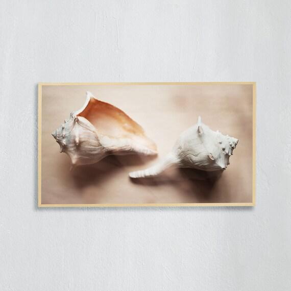 Frame TV Art, Digital downloadable art photography, Art photo of white sea shells, Art for digital TV