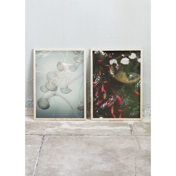 Art photography prints in a set of two. Photos of mint green jellyfish and a pond with orange fish in moss green water. High quality print.