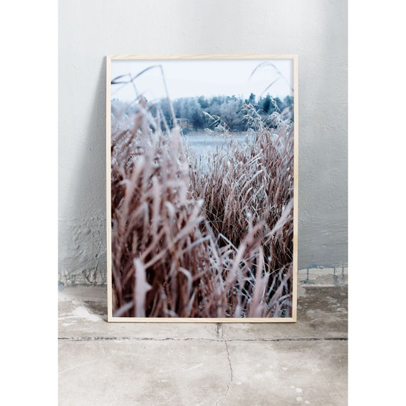 Photography art print of brown, frosty common reed by a blur frozen lake and frosty trees. Print is printed on a high quality, matte paper