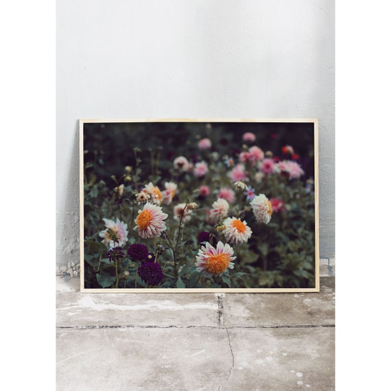 Photography art print of different dahlias. Printed on a high quality, matte paper.