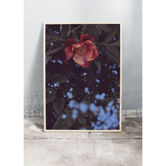 Photography art print of a burgundy red peony and blue tiny flowers. Print is printed on a matte, high quality paper.