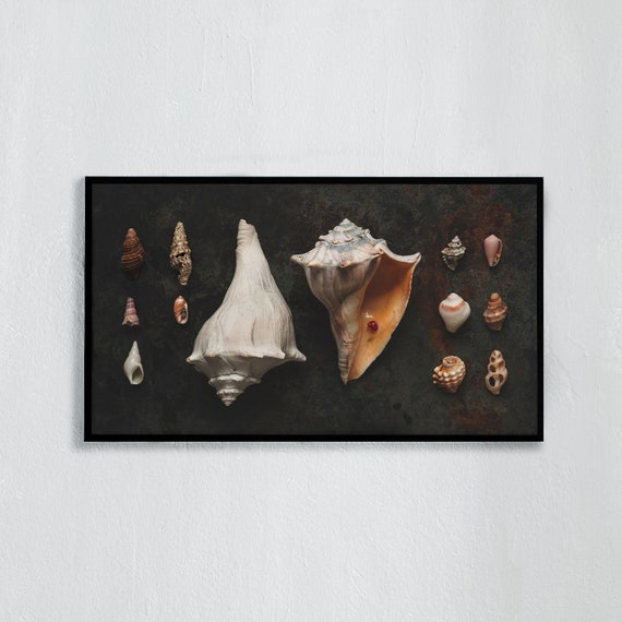 Frame TV Art, Digital downloadable art photography, Art photo of sea shells, Art for digital TV