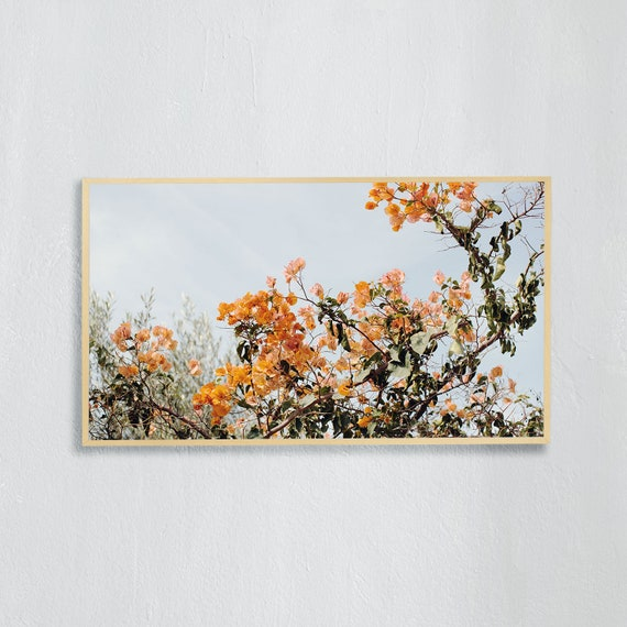 Frame TV Art, Digital downloadable art photography, Art photo of orange bougainvillea, Art for digital TV