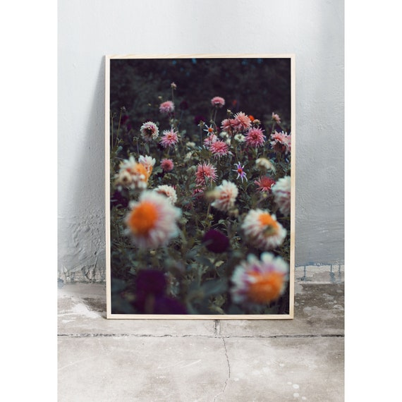 Photography Print, Art, Dahlia, Wall Art, Nature Art, Flower Print, Pink, Nature Print, Garden Wall Art, Art Print, Flowers, Blossoms