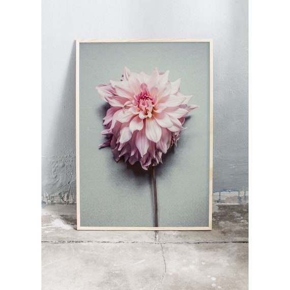 Art photography print of a pink dahlia. Print is printed on a high quality, matte paper.