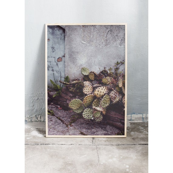 Photography art print of a cactus against a grey and blue wall. Print is printed on a high quality, matte paper.