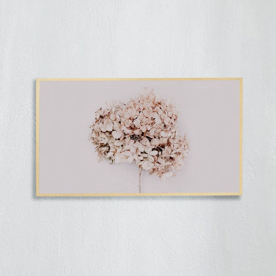 Frame TV Art, Digital downloadable art photography, Minimalist Art photo of a beige, dried hydrangea flower, Art for digital TV