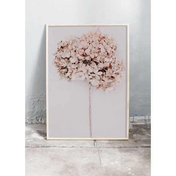 Photography art print of a brown-beige dried hydrangea flower. Printed on a high quality, matte paper.