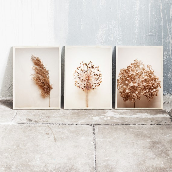 Set of 3 downloadable and printable photography prints, natural tones wall art, reed grass, dried allium and dried hydrangea