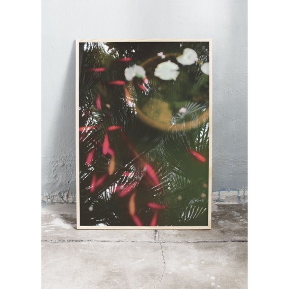 Photography art print of a moss green fish pond with red and orange fish. Printed on a high quality, matte paper.