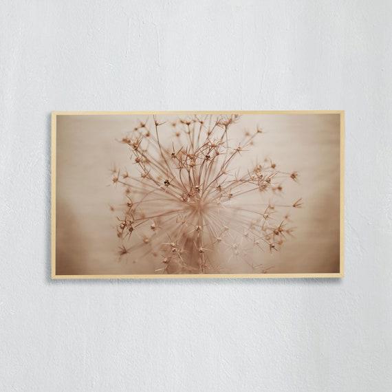 Frame TV Art, Digital downloadable art photography, Minimalist Art photo of the dried allium flower, Art for digital TV