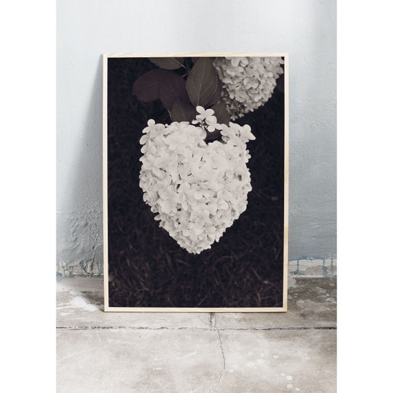 Downloadable digital art photography of the hydrangea flower in black and white