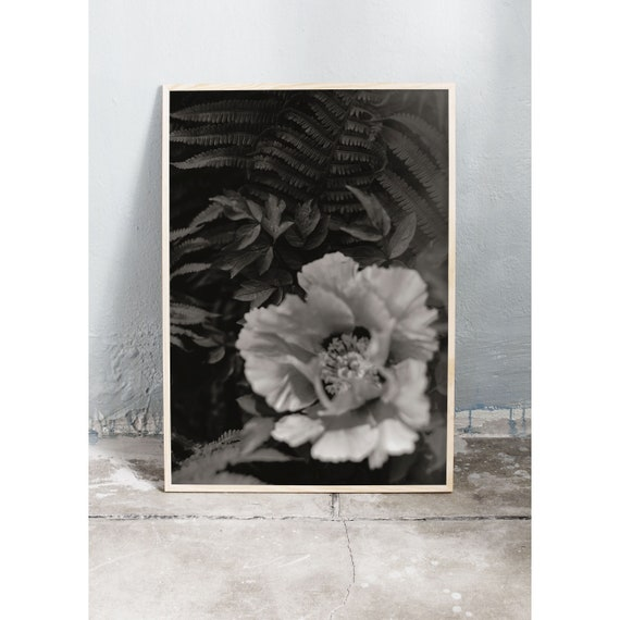 Black and white digital downloadable photo of a peony and fern in the botanical garden in Copenhagen.