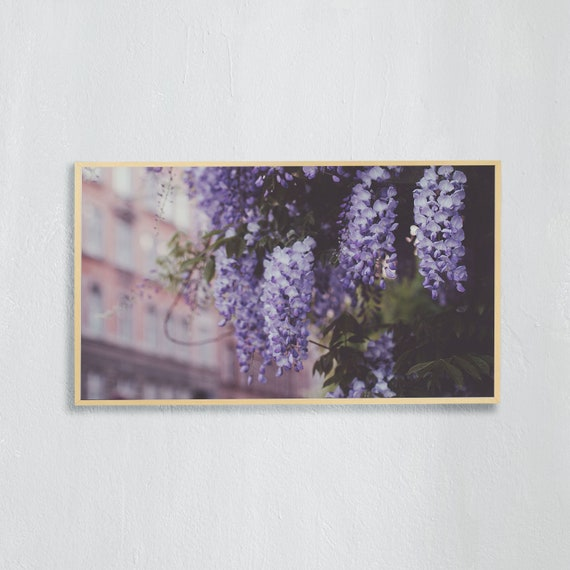 Frame TV Art, Digital downloadable art photography, Art photo of purple wisteria on a Copenhagen street, Art for digital TV