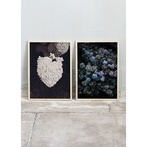 Photography Prints, Art, Set of 2, Hydrangea, Art Prints, Wall Art, Flowers, Color Print, Nature, Purple, Art, Black and White Photography