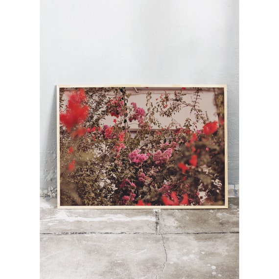 Photography art print of pink and red bougainvillea growing on Crete in Greece. Print is printed on a high quality, matte paper.