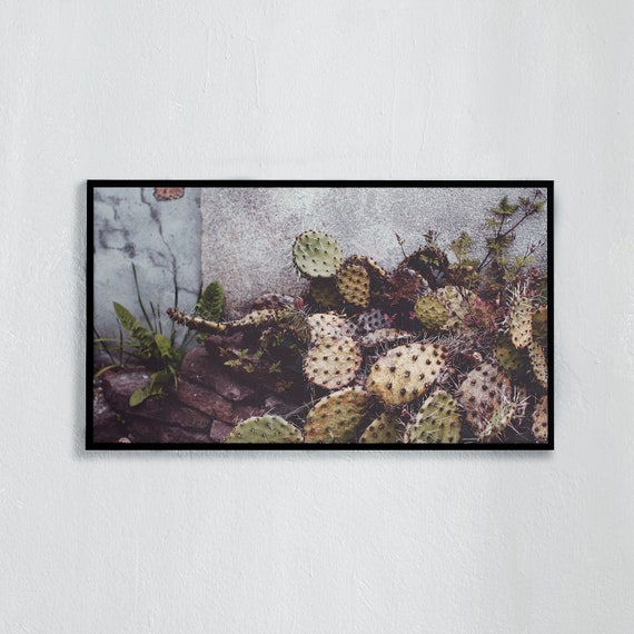Frame TV Art, Digital downloadable art photography, Art photo of a cactus, Art for digital TV