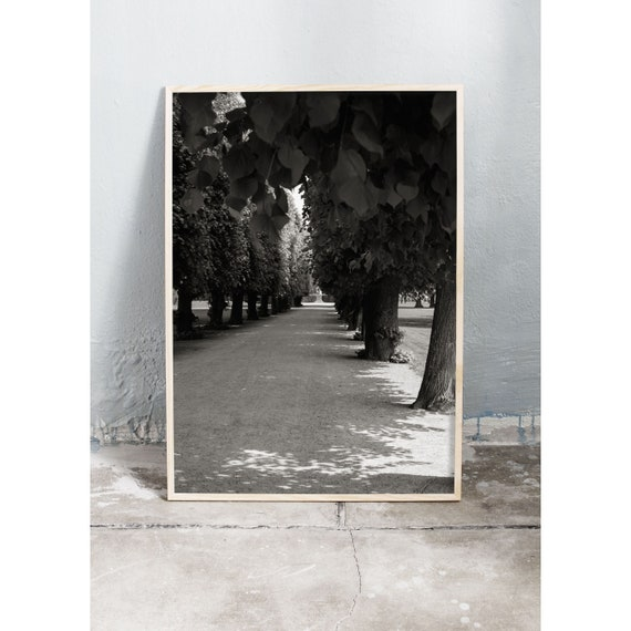 Black and white digital downloadable photo from Kongens Have (the kings garden) in Copenhagen, Denmark on a spring day.