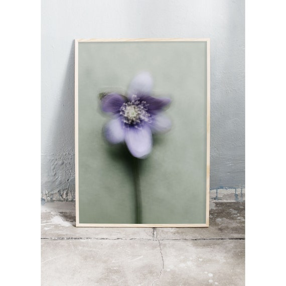 Photography art print of the wild spring flower hepatica. Printed on a high quality, matte paper.