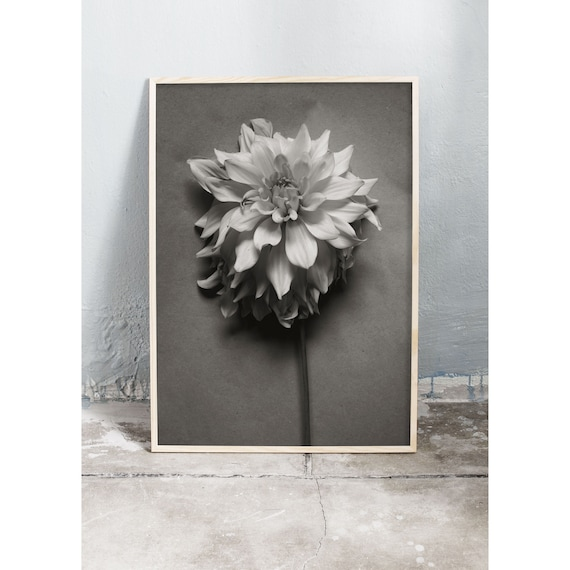 Black and white digital downloadable photo of the Dahlia flower.