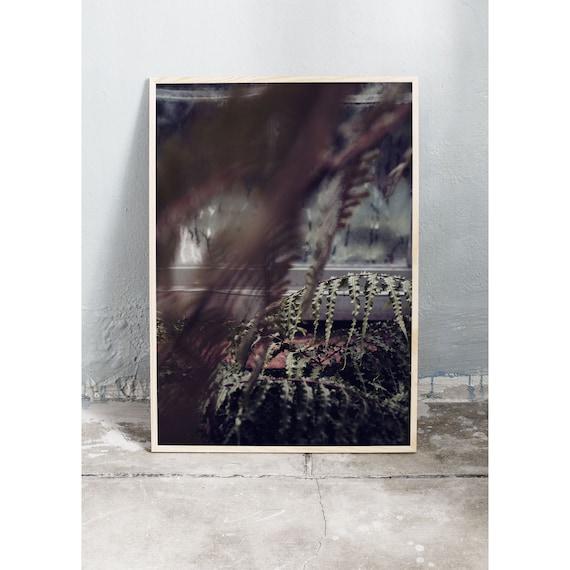 Photography Print, Copenhagen no 3, In the Greenhouse, Wall Art, Nature Art, Fern, Green, Wild, Mint Green Wall Art, Art Print, Flower
