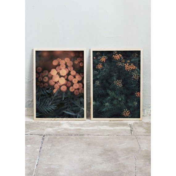 A set of two art photography prints of the wild, burnt orange flower Tansy. Prints printed on a specially chosen high quality matte paper.
