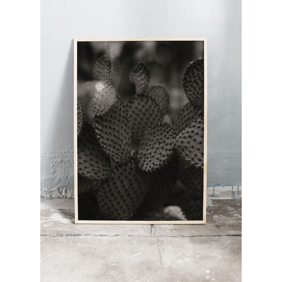 Black and white digital downloadable photo of cactuses in the green house in the botanical garden in Copenhagen.